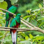 Refugio del Quetzal, San Marcos, Guatemala -parte 3