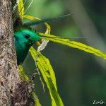 Refugio del Quetzal, San Marcos Guatemala- parte 1