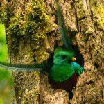 Refugio del Quetzal, San Marcos, Guatemala -parte 2